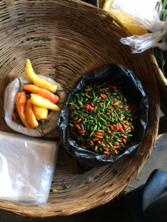 Hot peppers, Guatemala
